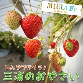 野菜でまちを元気にする!!「三浦のおやさいアプリ」プロジェクト進行中!