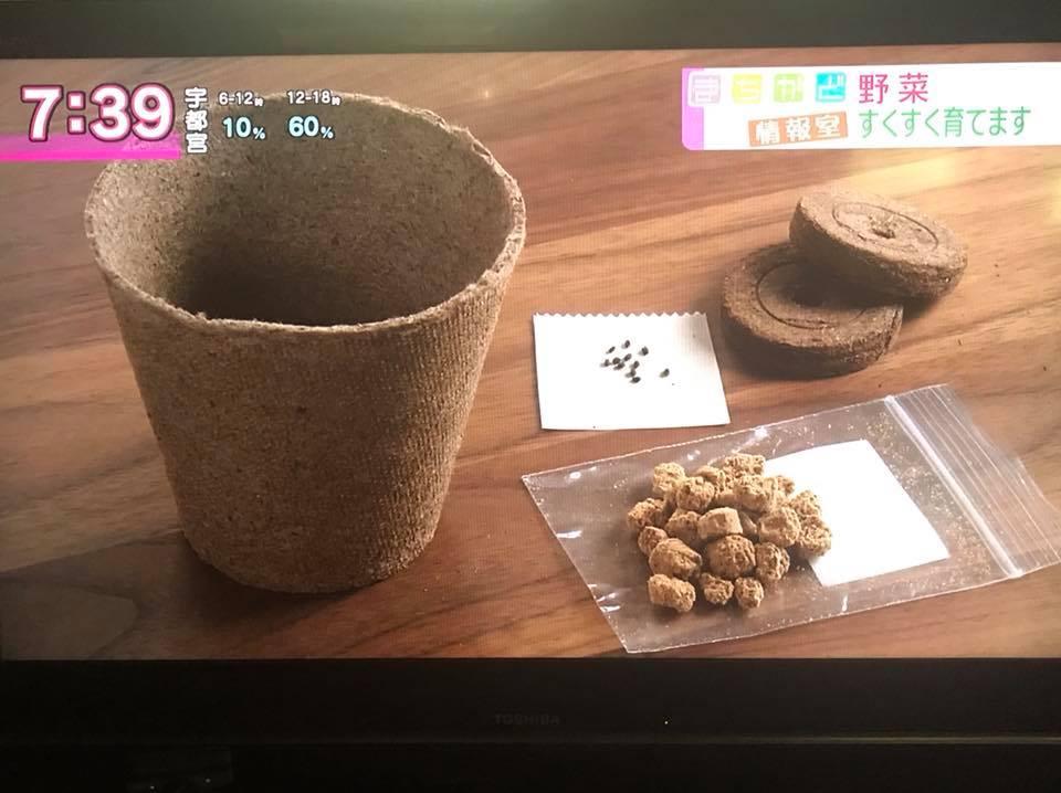 NHK「おはよう日本 まちかど情報室」で『三浦やさい栽培キット』紹介